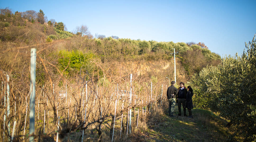 Colli Berici Yeasteria Vino Biologico Winetour