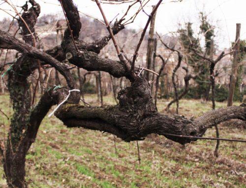 Yeasteria Bit: Lukas, Piedmont Lady e la degustazione itinerante